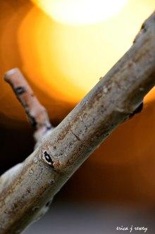 Branch-Bug